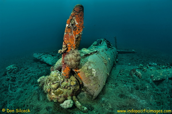 Kimbe Bay\'s Zero Wreck - Image Gallery