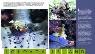 Diving PNG: Loloata Article – SportDiving