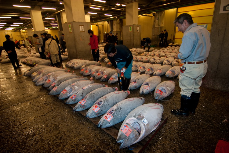 Australian Great White Shark Cage Diving - Frozen Tuna at Tsukiji Fish Market in Tokyo