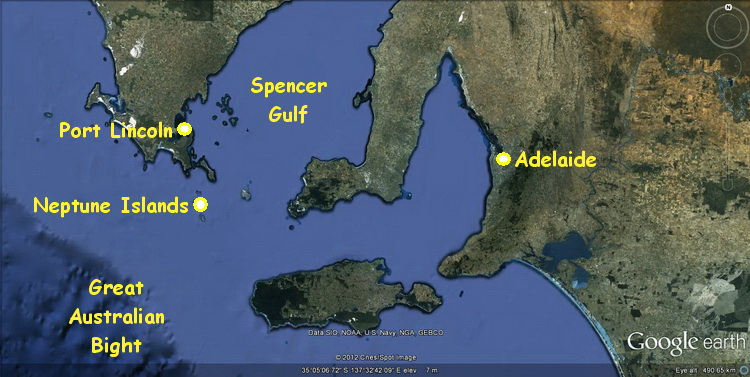 Map of South Australia's Spencer Gulf showing the Neptune Islands