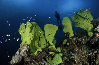 Diving Milne Bay – North Coast Dive Sites