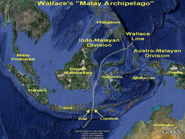"The ""Malay Archipelago"" & the Wallace Line Map"