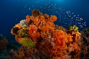 Scuba Diving in Papua New Guinea