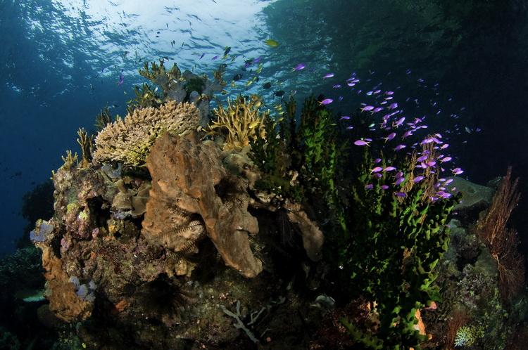Deacon's Reef - Underwater at Deacon's Reef