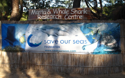 Tofo's Manta and Whale Shark Research Centre
