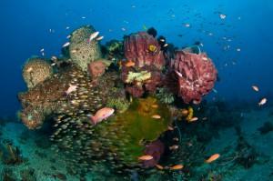 Timor Leste Reef Scene