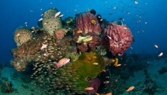 Reef Scenic from Maubara in Timor Leste