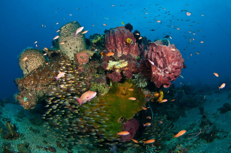 The Complete Guide to Scuba Diving in Timor Leste