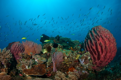 Timor Leste: Dive Sites West of Dili