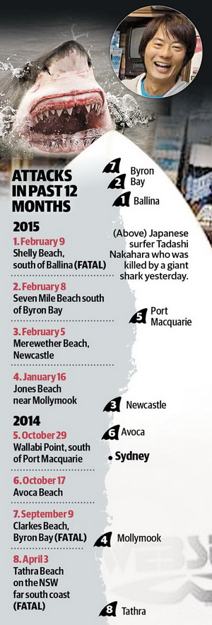 Australian Great White Shark - Shark Attacks Daily Telegraph