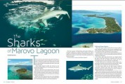 Diving the Solomon Islands: The Sharks of Marovo Lagoon