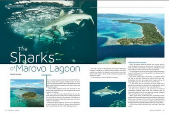 The Sharks of the Marovo Lagoon