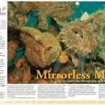 Mirrorless Macro Underwater Photography Part 2