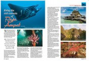 Diving Indonesia – The Rich Currents of Raja Ampat