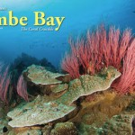 Kimbe Bay, The Coral Crucible - X-Ray Article