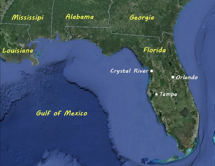 The Crystal River manatees - Map of Florida showing Crystal River