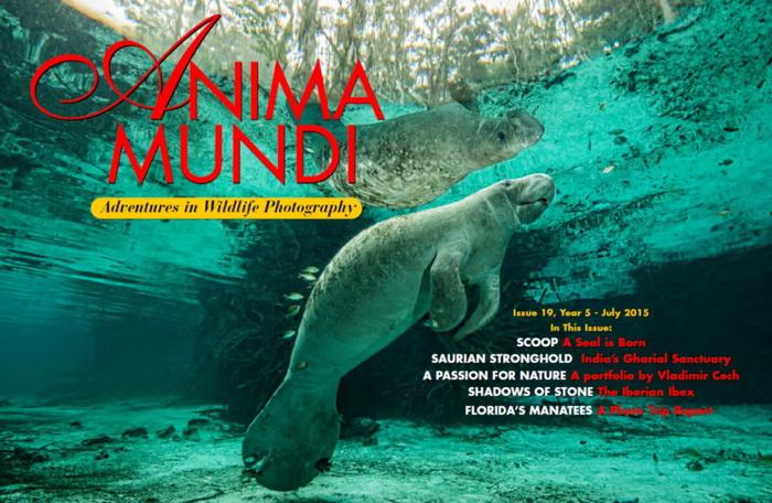 Anima Mundi magazine - Crystal River Manatees