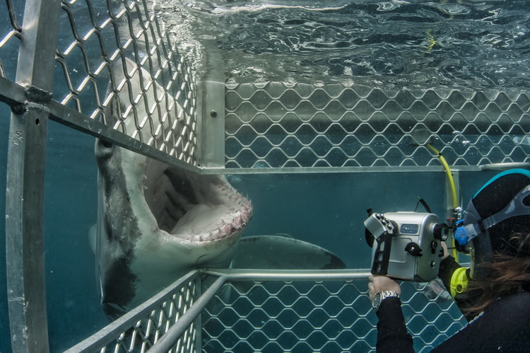 In the Great White Shark cage