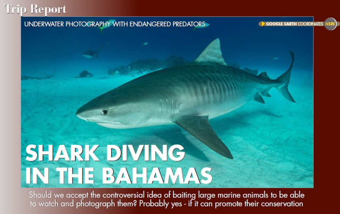 The Tiger Sharks of the Bahamas - Anima Mundi Article