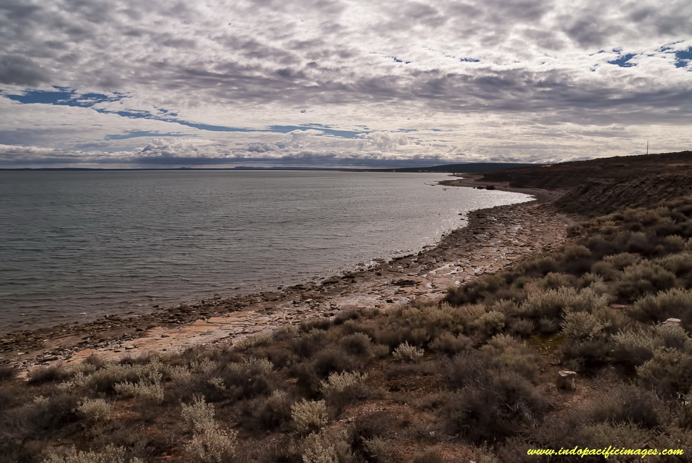 Cuttlefish conservation in Whyalla - The area around Black Point, near Whyalla in South Australia