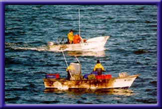 Cuttlefish Conservation in Whyalla - Commercial Fishing Boats