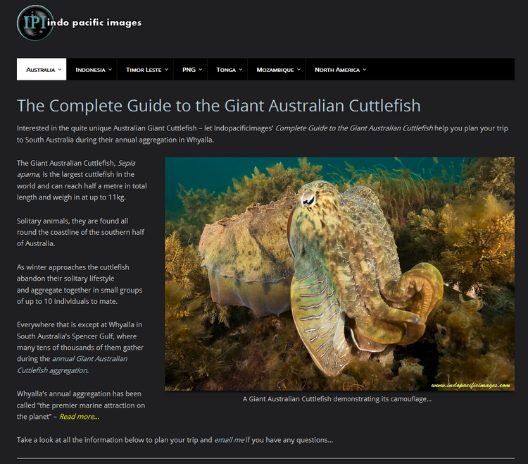 Unique Giant Australian Cuttlefish
