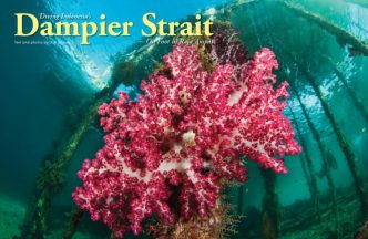 Resort Based Diving in Raja Ampat